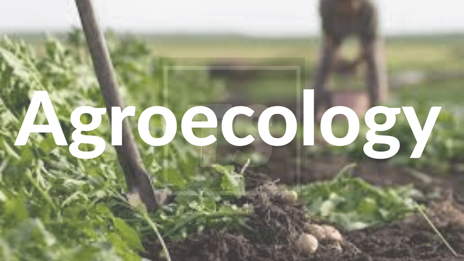 Brief Info Agroecology: Overview, Benefits, Trend